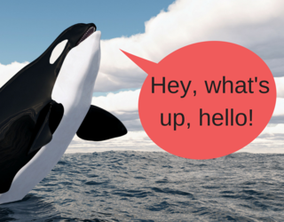 Killer Whales Can Now Imitate Human Speech and Excuse Me, but Why Aren't We All Freaking Out?