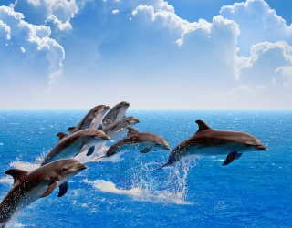 You're Only One Puzzle Away From Dolphinish Line!
