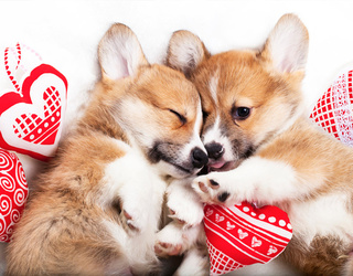 Can You Find The Differences In These Puppy Love Photos?