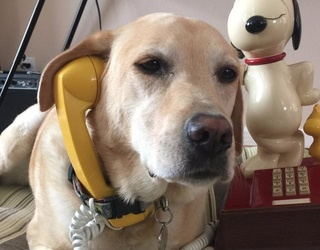 This Is What It Would Be Like if Your Pet Could Text You
