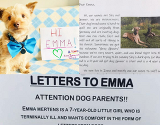 Letters to Emma Brings Together Two of Our Favorite Things: Dogs and a Great Cause