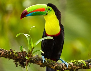 Toucan Play That Game When It Comes to Identifying These Birds