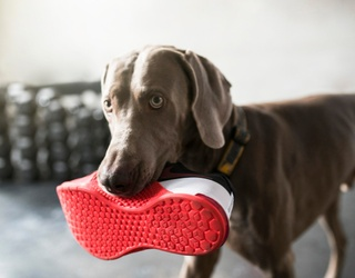 Match These Photos of Dogs Interrupting New Year's Wellness Goals
