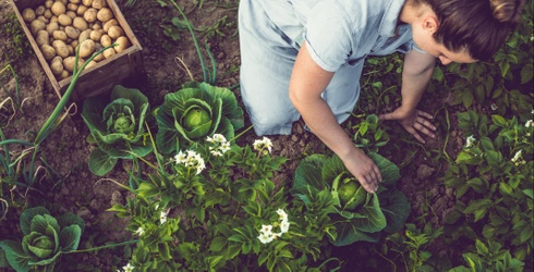 Can You Dig It? Find out by Unscrambling This Gardening Puzzle