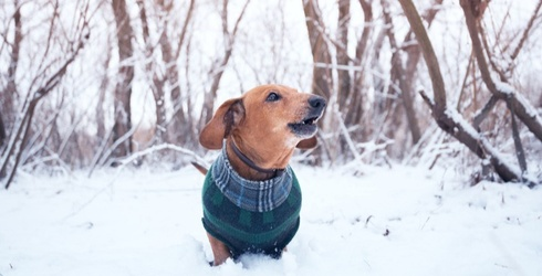 9 Dogs Who Are Feeling Warm and Cozy (Whether They Like It or Not)