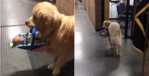 Therapy Dog Steals Donated Toys, Refuses to Surrender Evidence