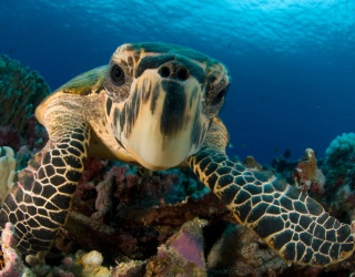 """Give This Sea Turtle Puzzle a Big, """"Hello!"""""""