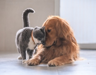 Dog Owners Are (Kind of) Found to Be Happier Than Cat Owners...Do You Buy It?