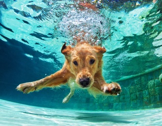 Stay Cool Just Like This Pup in the Pool Puzzle