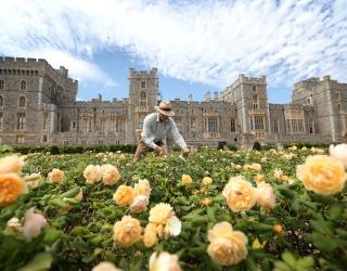 Unscramble Windsor Castle's East Terrace Rose Garden