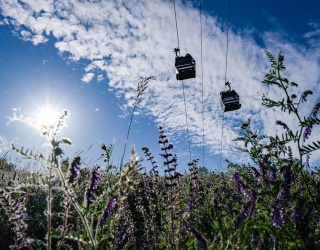 Unscramble These Cable Cars Before They Fly on By