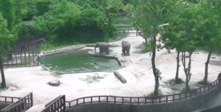 These Elephants Rescuing a Drowning Baby Elephant Give Us Hope in the Flaming Dumpster Fire That Is 2017