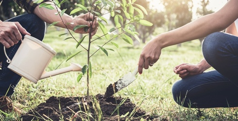 Monday Memory Madness: Plant a Tree on Earth Day via This Memory Match