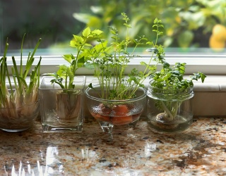 Save Your Snippings: Edible Plants You Can Grow From Your Windowsill