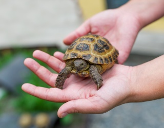 Myth Mayhem: Do Turtles Breathe Through Their Butts? And Other Weird Pet Myths