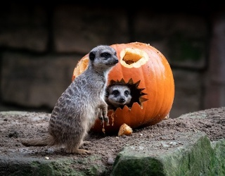 Halloween Came Early to Germany's Hannover Zoo