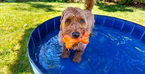 6 Kiddie Pools & Sprinklers...but for Your Fur Baby