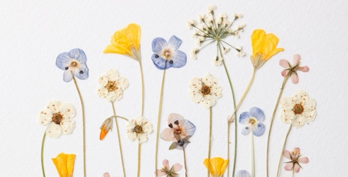 Press Your Luck With This Dried Flowers Memory Match