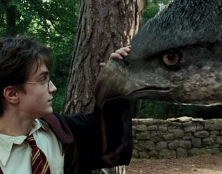 """The Definitive Ranking of the Creatures In """"Harry Potter"""""""