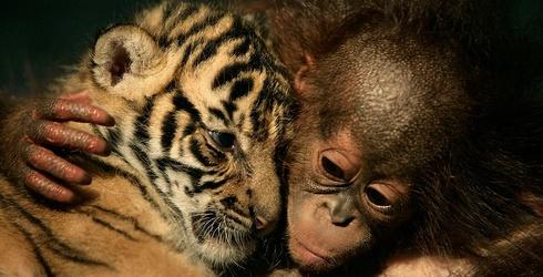9 Bizarre Animal Hybrids That Actually Exist
