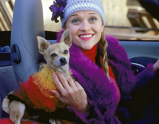 """Is Reese Witherspoon About to Cast This Giraffe in """"Legally Blonde 3""""?"""