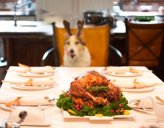 Your Four-Legged Fur Baby Is Ready for Thanksgiving Dinner