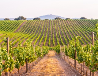 Can You Piece Together the Rolling Hills of This Vineyard Puzzle?