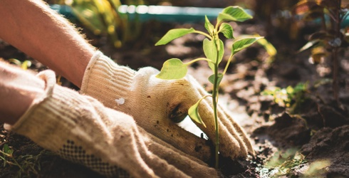 Gardening for Stress: How Plants Can Help Manage Anxiety and Where to Get Started
