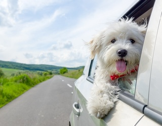 Match These Dogs Doing Their Favorite Thing: Going for a Ride