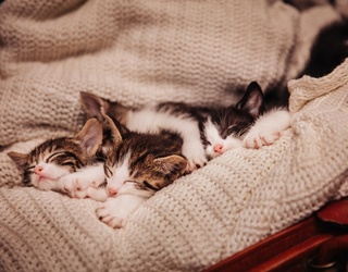 Spend Caturday the Right Way With This Pile of Kittens in a Puzzle