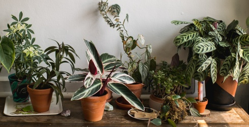 Yes, It Is Possible to Have a Garden in Your Tiny AF Apartment