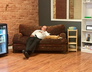 This Retiree's (Literal) Cat Naps Are Proving Lucrative for the Felines' Shelter