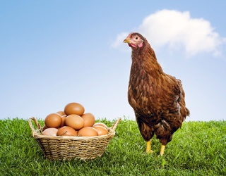 Cabinet of Curiosities: Which Came First, the Chicken or the Egg? (Yes, Really)