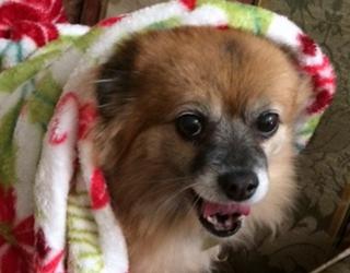 "#PetStats: Meet Kyla the ""Crumb Snatcher"""