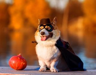 Corgi Says BOO! Unscramble This Spooky Season Puzzle