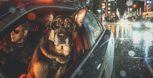 The Vancouver Police Department Just Released a K9 Unit Calendar, as if We Needed Another Reason to Move to Canada