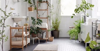 Shower Plants Are Now a Thing, in Case Your Morning Rinse Was Missing Some Foliage