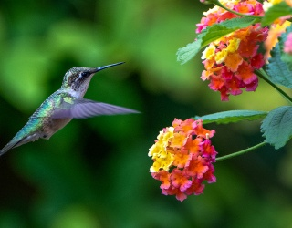 Blink and You'll Miss All the Differences in These Hummingbird Photos