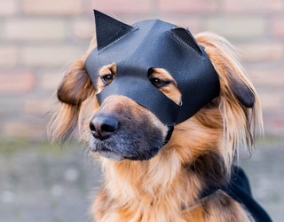"""These Pet Halloween Costumes Are One Million Times Better Than Your """"Sexy Witch"""" Get-Up"""