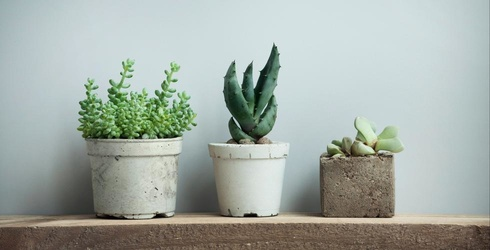 It's Not Easy Being Green; Can You Find All the Matches in These Succulent Photos?