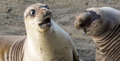 The Comedy Wildlife Photo Awards Celebrate Less-Than-Majestic Moments in the Animal Kingdom