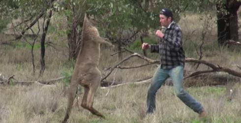 Dude Punches Kangaroo to Save His Dog, Becomes a Viral Sensation