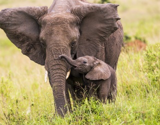 Gather 'Round and Lift Your Trunks on World Elephant Day 2019
