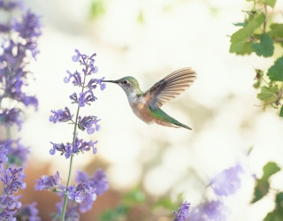 Can You Wing This Hummingbird Memory Match?
