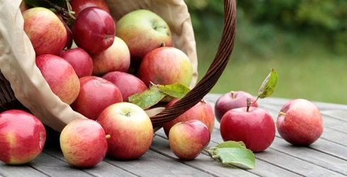6 Essentials You Need for Apple Picking This Season