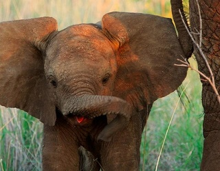 Squeeeeee Look at the Baby Elephants! Can You Match All the Adorable Photos?