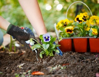 Do You Know When and How to Plant Flowers in Your Garden?