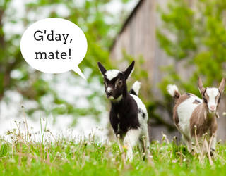 Today I Learned That Goats Have Accents and It's the Old News I Didn't Know I Needed