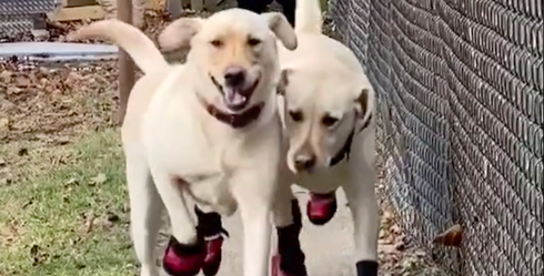 A Happy, Happy Compilation of Happy Dogs Dancing on TikTok