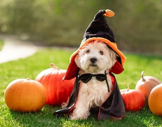 8 Pawsitively Cute Dog Halloween Costumes for 2021